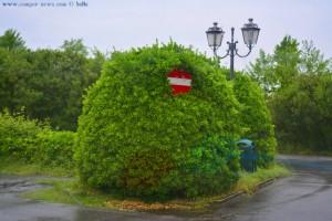 Schild mit Busch – oder Busch mit Schild - Torre del Lago Puccini – Italy