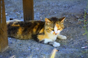 Junge und hungrige Katze am Venetikos River – Greece