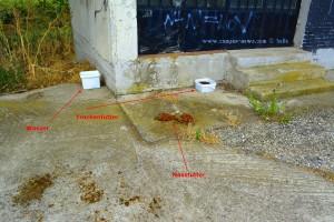 Jemand füttert die drei Welpen wohl - nahe Xanthis – Greece