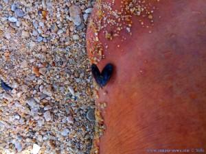 Diese kleine Miesmuschel an meinem Fuß ist nicht länger als 1cm!