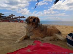 Nicol leistet mir Gesellschaft - Portofino Beach – Greece