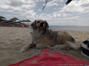 Nicol leistet mir Gesellschaft - Portofino Beach – Greece (Selected Colors)
