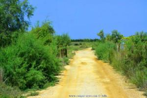 Mal wieder auf Feldwegen unterwegs - On the Raod in Greece