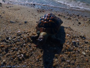 Tote Schildkröte am Portofino Beach – Greece