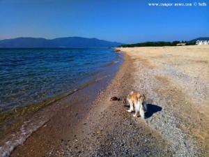 Nicol und die tote Schildkröte am Portofino Beach – Greece