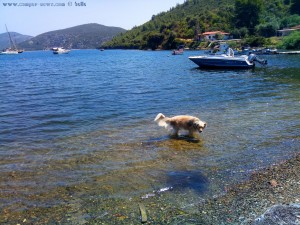 Nicol muss sich abkühlen - Porto Koufos – Greece