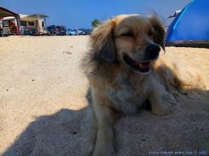 Nicol leistet mir Gesellschaft am Tristínika Beach - Greece