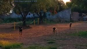 Wilde Hunde in Griechenland