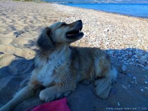 Nicol nach erfolgreicher Schwimmstunde am Strand von Papa Aloni – Greece
