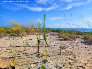 Meine Aussicht am kleinen Strand - HDR [High Dynamic Range]