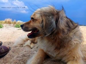 Nicol am Strand von Agios Sotiras - Thermaikos Kolpos – Greece