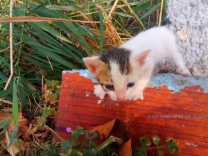 Kater Oscar - gerade mal ungefähr 3-4 Wochen alt - Ikismos Lefkes – Greece
