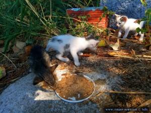 Kater Oscar und Kater Paul - Katze Tiger Lilly frißt - Ikismos Lefkes – Greece