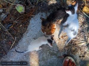 Kater Oscar und Kater Paul - Katze Tiger Lilly frisst - Ikismos Lefkes – Greece