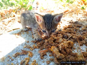 Lilly kaut am alten Futter herum - Ikismos Lefkes – Greece