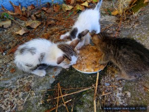 Endlich - alle drei fressen - Ikismos Lefkes – Greece