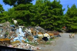 Ziegen auf einem Müllberg bei Agkali - Greece
