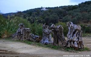 Charakterristisches Merkmal am Metamorfosi-Beach – Greece