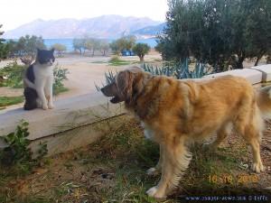 Nicol und die Katze am Metamorfosi Beach – Greece