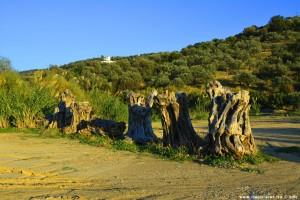 Wahrzeichen vom Metamorfosi Beach – Greece