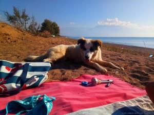 Freundlicher Hund am Avramiou Beach – Greece