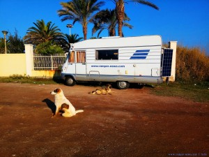 Unsere zwei wilden Hunde am Avramiou Beach - Greece