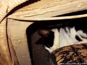 Tierasyl Camper-News - Katze auf dem Reifen am Epitalio Paralia – Greece