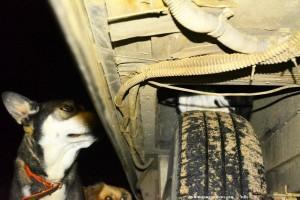 Tierasyl Camper-News - Hund mit einem blauen Auge und einem braun-blauem Auge - Katze auf dem Reifen - Epitalio Paralia – Greece