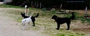 Die wilde angriffslustige Meute in Kalogria – Greece