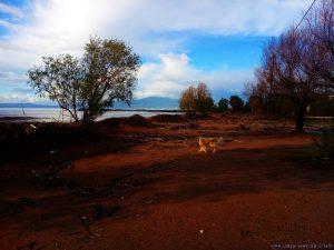 Nicol am Avramiou Beach – Greece
