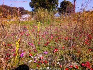 Vielen Dank für die Blumeeeeeen – vielen Dank – wie lieeeeb von Diiiir - Cheronisi Beach – Greece