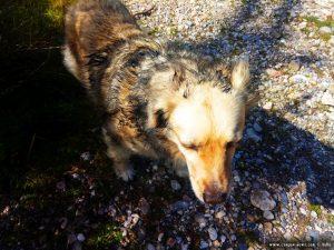 Nicol nahm Hunde-Parfüm - Cheronisi Beach – Greece
