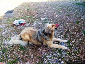 Nicol mit Hunde-Parfüm - Cheronisi Beach – Greece