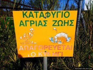 Enten und Schildkröten auf dem Weg - Cheronisi Beach – Greece
