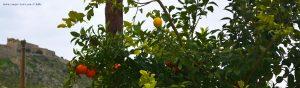 Die Zitrone am Orangenbaum - Nafplio - Greece