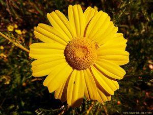 Vielen Dank für die Blumeeeeeen – vielen Dank – wie lieeeeb von Diiiir - Metamorfosi Beach – Greece