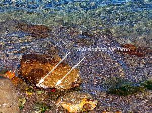 Was sind das für Tiere am Metamorfosi Beach – Greece