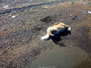 Nicol nimmt Hundeparfüm am Metamorfosi Beach – Greece