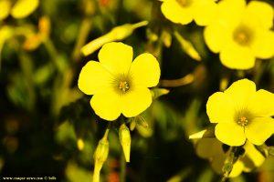 Unbekannte Blume am Metamorfosi Beach – Greece