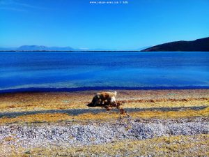 Nicol am Paralimni / Kalogera Lagoon - Cape Araxos – Greece