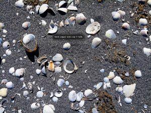 Schwarzer Sand und viele Muscheln am Paralimni / Kalogera Lagoon - Cape Araxos – Greece