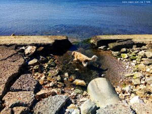 Mit Nicol auf Spaziergang - Astakos – Greece