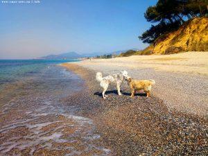 Nicol und der wilde Hund am Kanali Beach – Greece