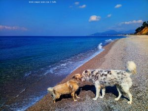 Nicol und der wilde Hund am Kanali Beach - Greece