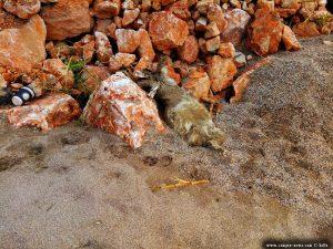 Ein verendetes Tier am Kanali Beach – Greece
