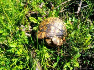 Schildkröte in Anaktorio – Greece