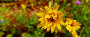 Vielen Dank für die Blumeeeeeen – vielen Dank – wie lieeeeb von Diiiir - Thiva – Greece