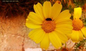 Vielen Dank für die Blumeeeeeen – vielen Dank – wie lieeeeb von Diiiir - Pachi – Greece