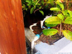 Nicol spürt jede Katze auf - Pachi – Greece
