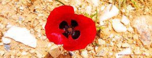 Vielen Dank für die Blumeeeeeen – vielen Dank – wie lieeeeb von Diiiir - bei Grammatiko - Greece